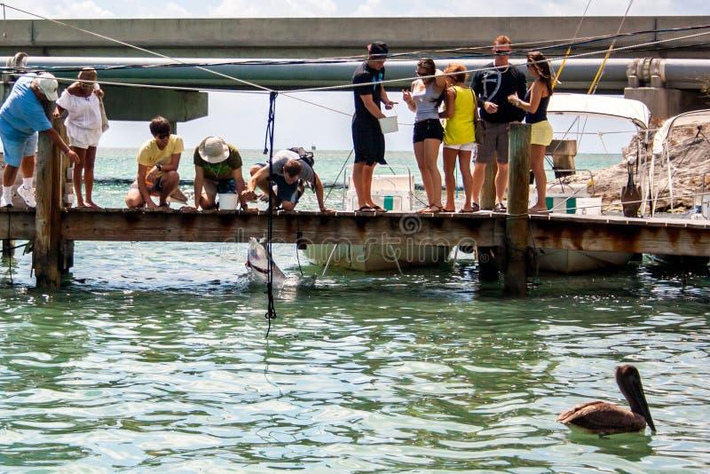 Рыбы людей подавая в море стоковые фотографии rf