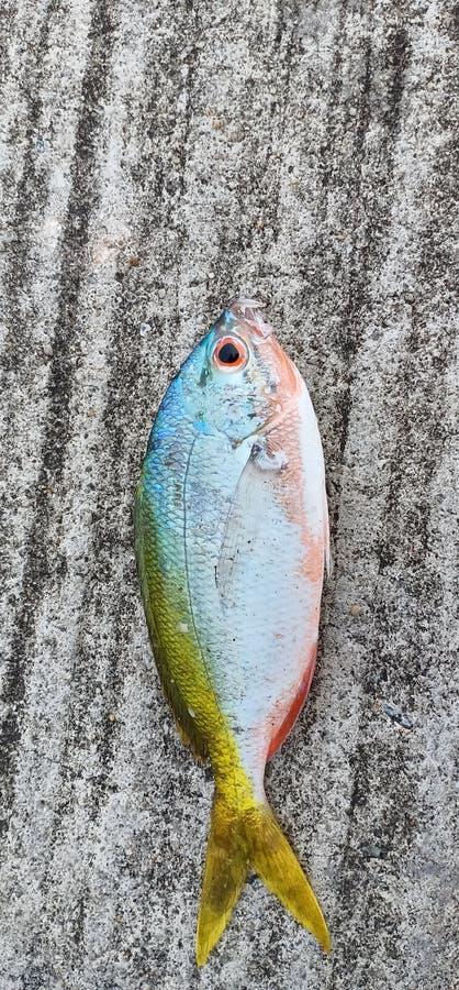 рыбы colourfull стоковая фотография