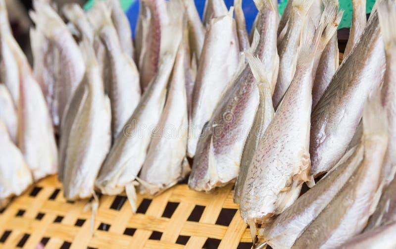 Рыбы Croaker стоковые изображения rf
