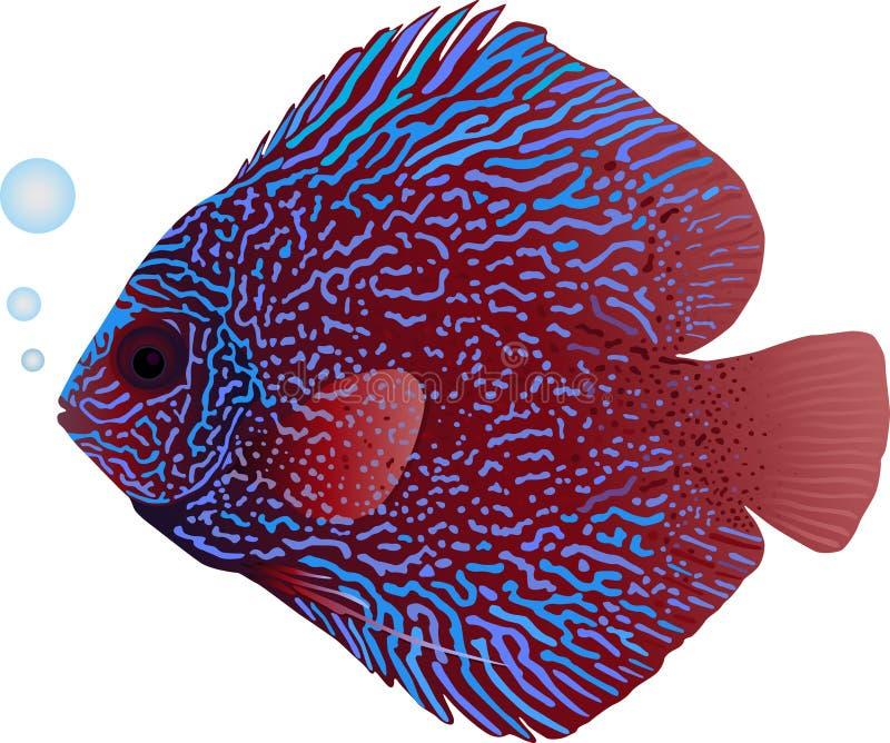 Рыбы Discus иллюстрация штока