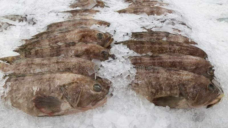 Рынок морепродуктов крупного плана стоковые изображения