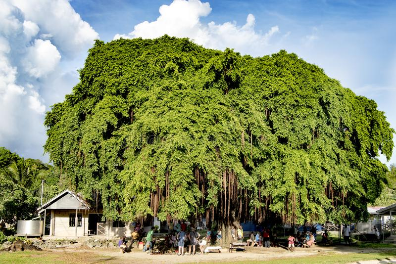 Рынок под действительно огромным тропическим деревом, Tulagi, Соломоновыми Островами стоковое изображение rf