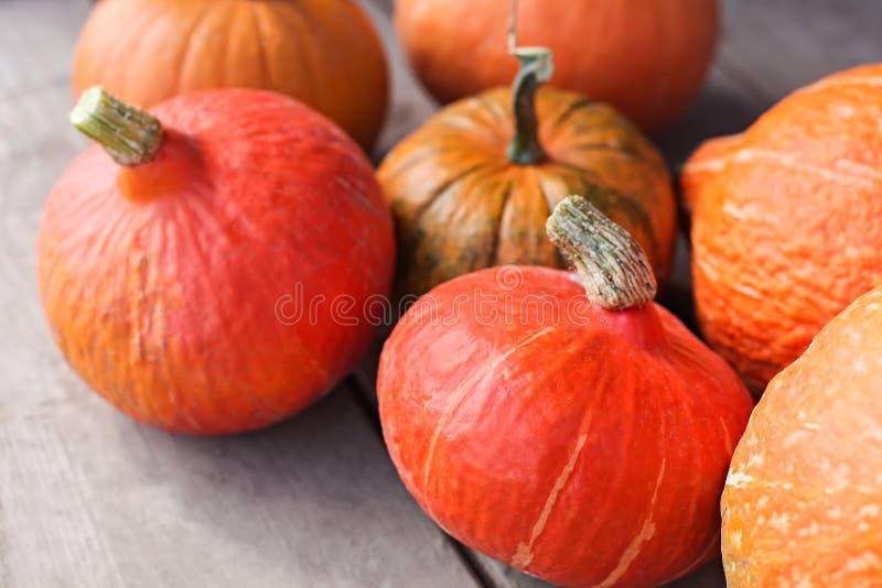 Рынок фермера, thanksgiven сбор оранжевых тыкв стоковое изображение rf