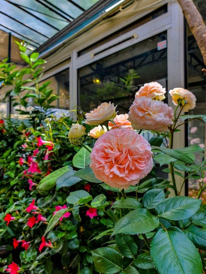 Рынок цветка в Париже размещал на Ile de Ла Цитировать, между часовней собора и Sainte-Chapelle Нотр-Дам стоковые фотографии rf