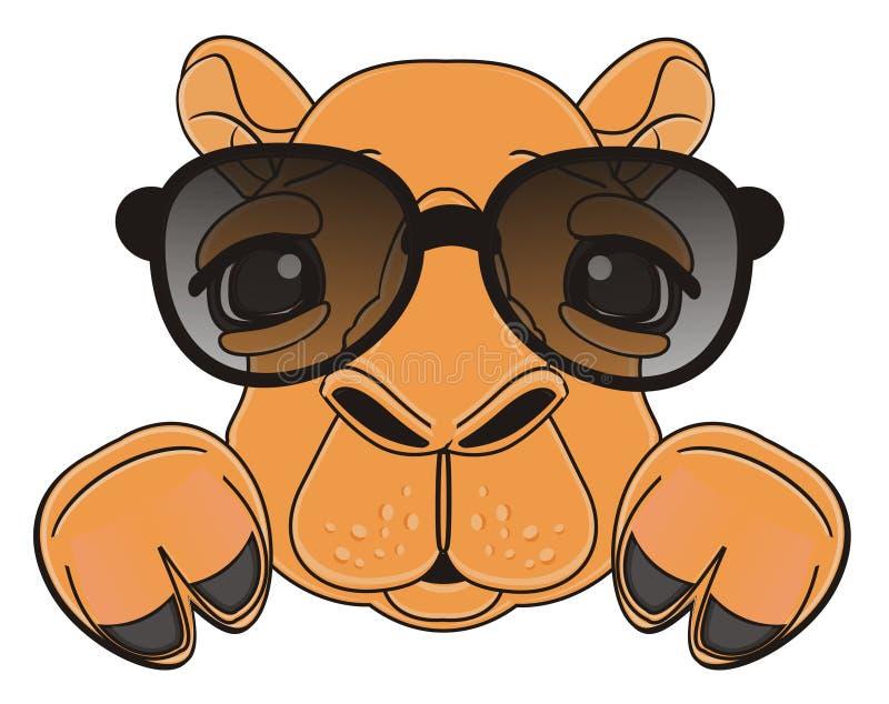 Рыльце верблюда в солнечных очках иллюстрация вектора