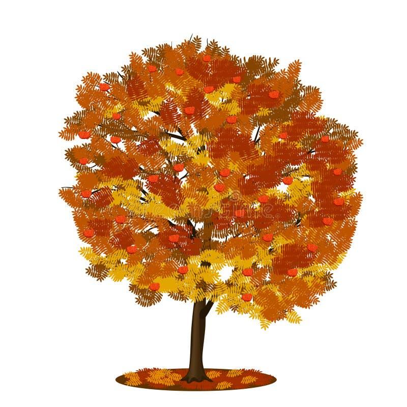 Рябина дерева с листьями красного цвета и желтого цвета стоковое фото