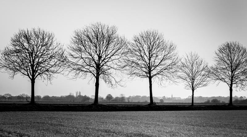 Рядок чуть-чуть силуэтов дерева стоковое изображение rf