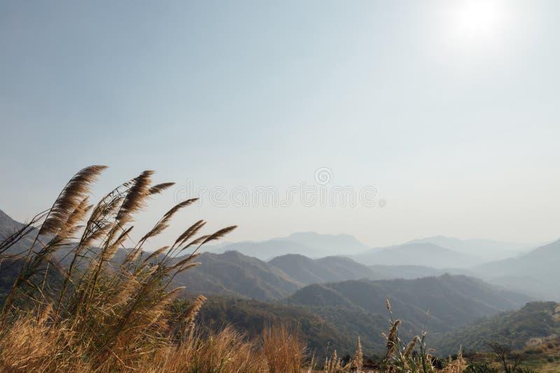 Ряд наклона травы и горы дерева листьев заросший лесом с видимыми силуэтами через утро стоковая фотография