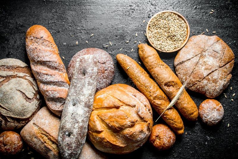 Ряд разных видов душистого хлеба стоковые фото