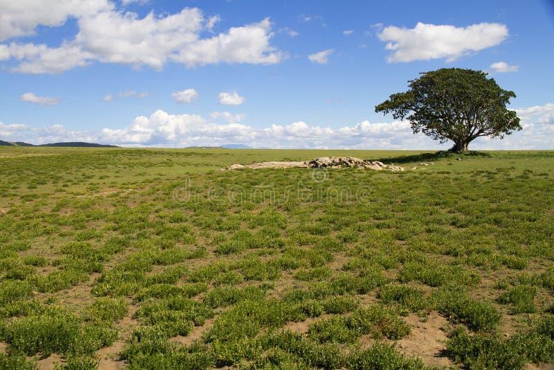 саванна стоковое фото rf