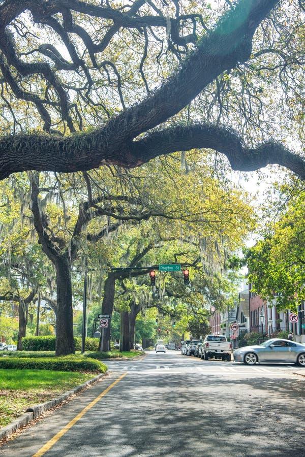 САВАННА, GA - 2-ОЕ АПРЕЛЯ 2018: Деревья в бульваре Oglethorpe Savann стоковое изображение rf
