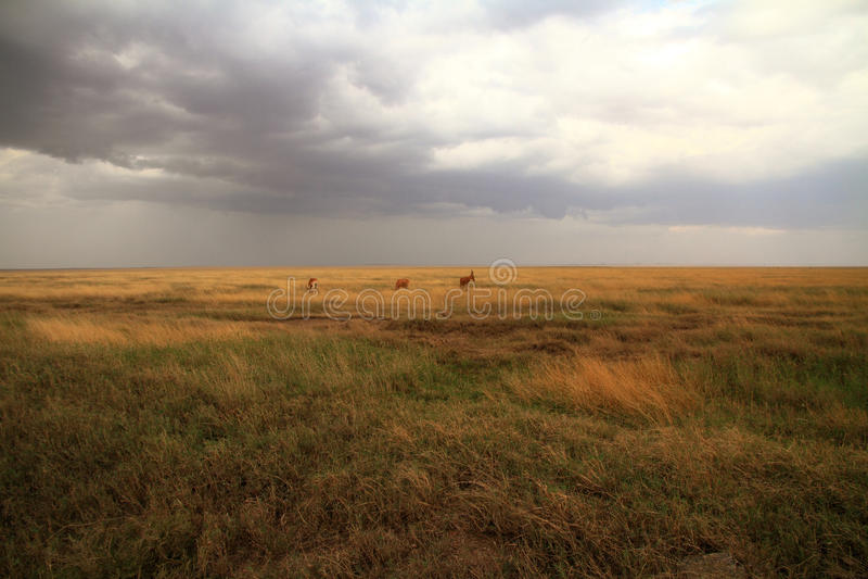 Саванна Serengeti и Hartebeest Джексона стоковое изображение