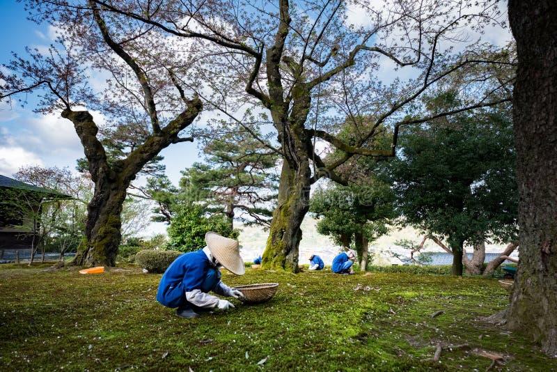 Садовники работая в саде одном Kenrokuen самых красивых садов ландшафта в Японии, размещают в городе Kanazawa стоковая фотография rf