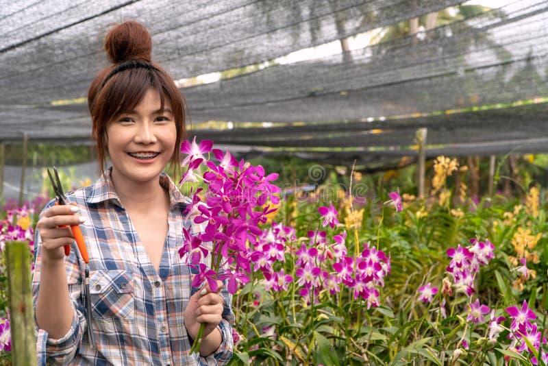 Садовник аранжировал сад орхидеи Удержание ножниц для того чтобы отрезать ветви и цветок орхидеи стоковое изображение rf