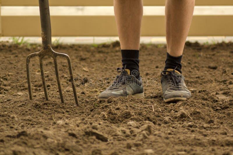 Садовник выкапывая с вилкой в саде Почва подготавливая для засаживать весной Сфокусированная селективная стоковое фото rf
