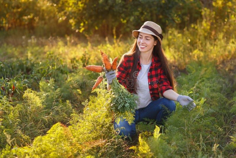 Садовник с морковами в огороде стоковые изображения rf
