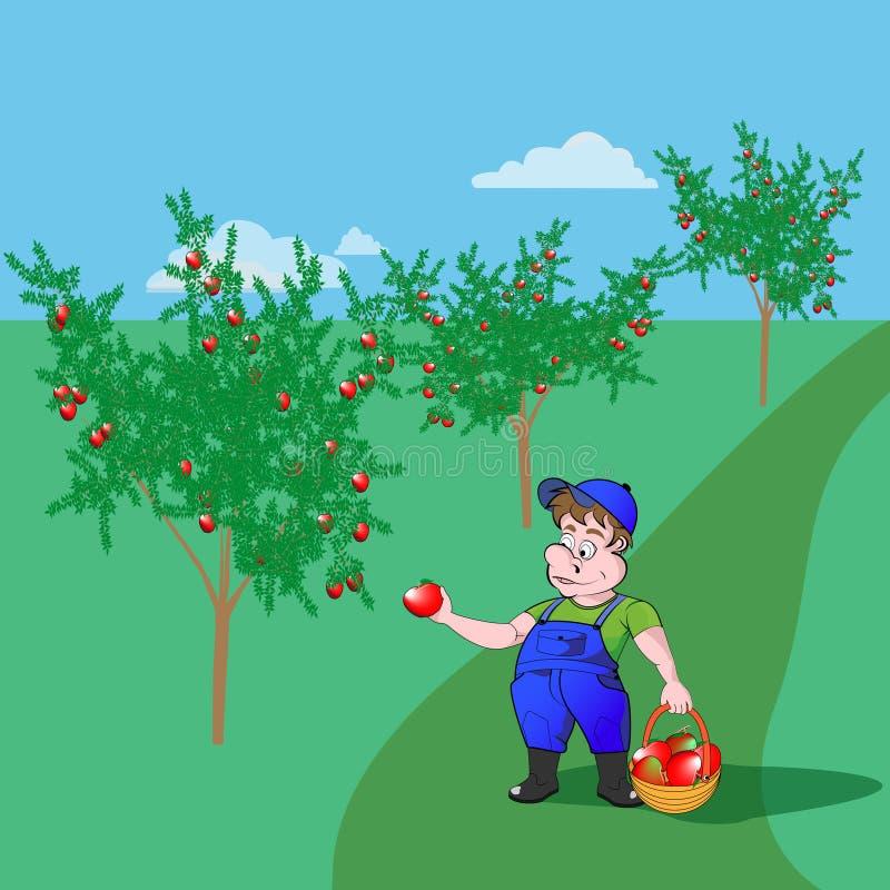Садовник с яблоками иллюстрация штока