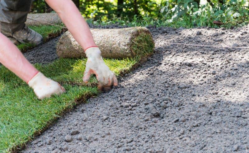 Садовник устанавливая крены травы дерна стоковые фотографии rf