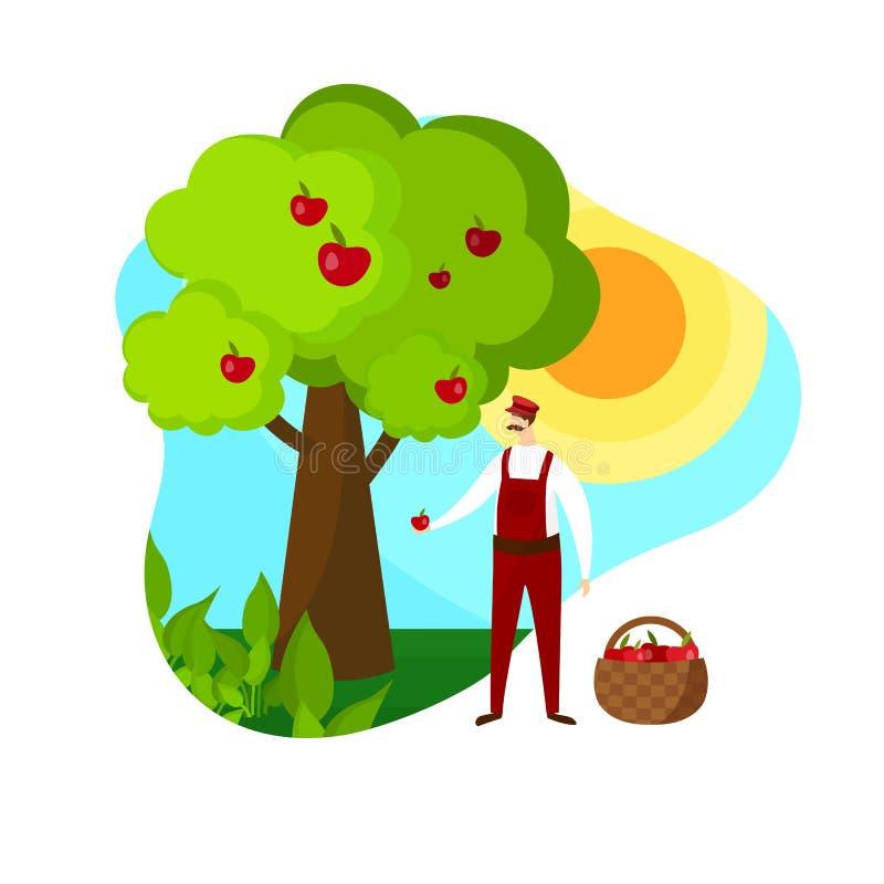 Садовник человека комплектуя зрелые яблоки в саде Значок иллюстрация штока