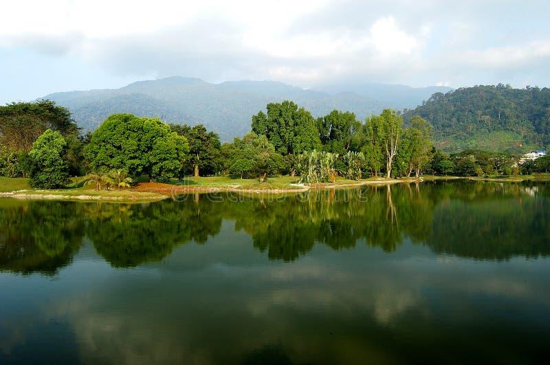 садовничает озеро taiping стоковые изображения rf