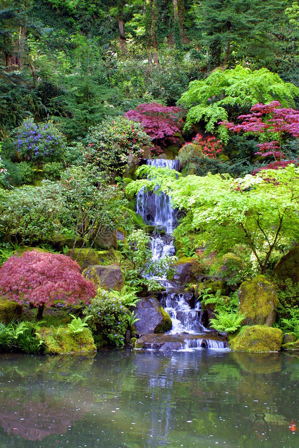 садовничает японский водопад портрета стоковое фото rf