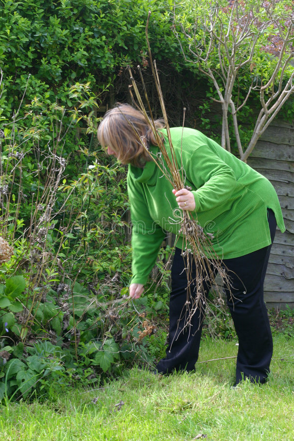 садовничая зеленая повелительница стоковые изображения rf