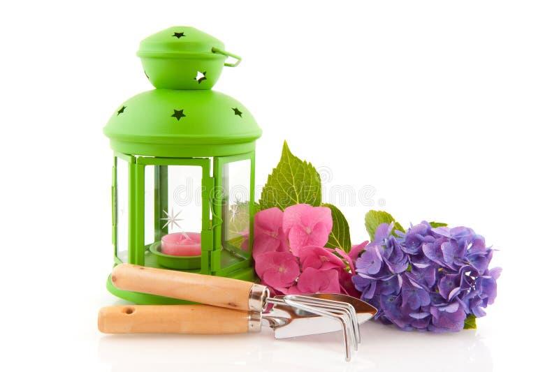 садовничая зеленые инструменты фонарика hydrangea стоковая фотография