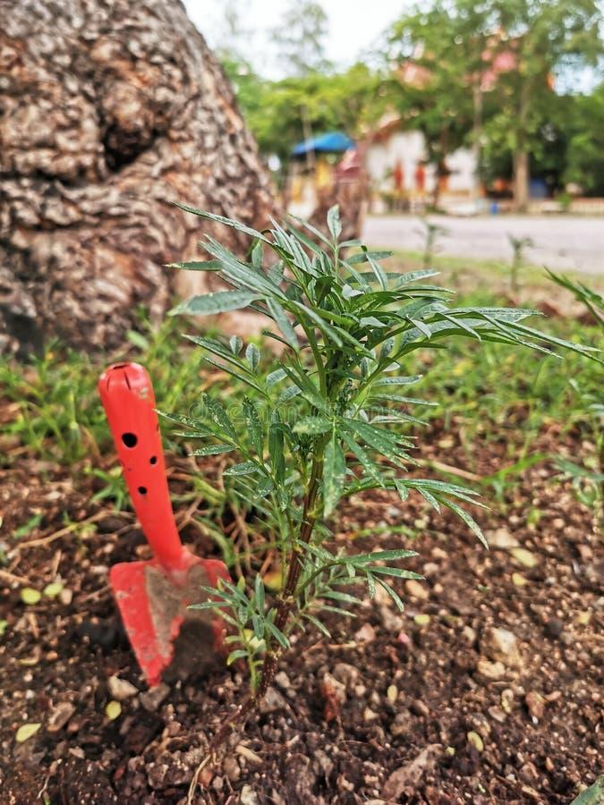 Садовничая инструменты на предпосылке текстуры плодородной почвы стоковое фото