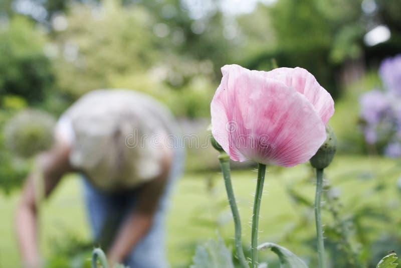 садовничая результат стоковая фотография rf