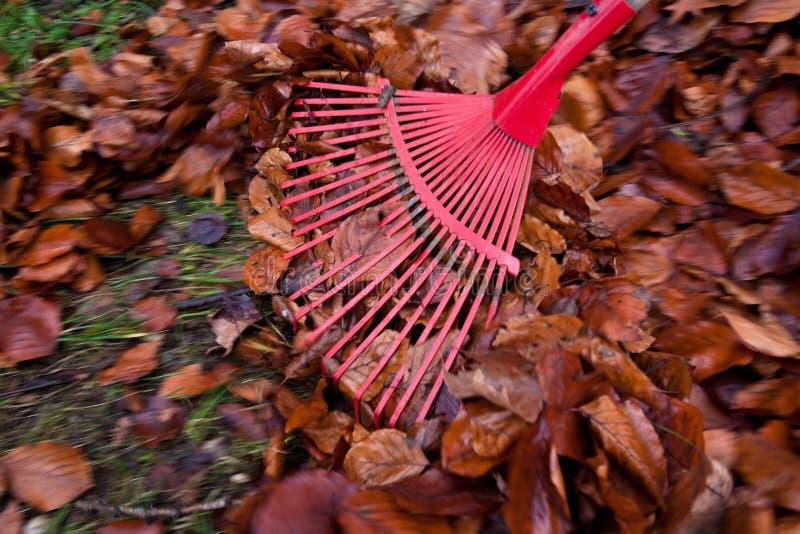 садовничая сгребалка листьев стоковые изображения rf