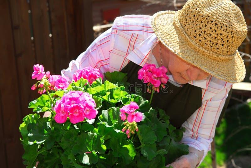 садовничая старшая женщина стоковое фото rf