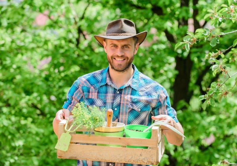 Садовничая экспертные подсказки Забота сада Зрелый человек фермера засаживая заводы o Бородатая коробка владением парня садовника стоковые фото