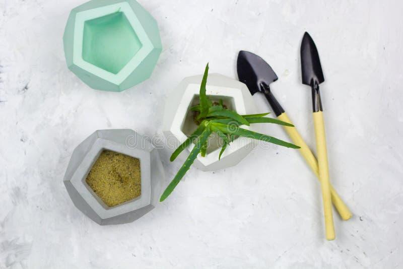 Садовые инструменты и бак vera алоэ суккулентный конкретный стоковые изображения