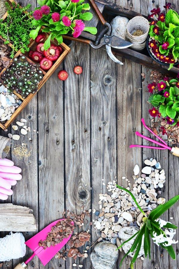 Садовые инструменты, цветки, удобрения, семена, садовые инструменты на деревянной предпосылке Концепция сада весны работая r Верх стоковые фото