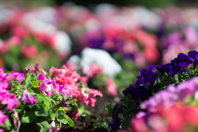 Сады Дункана в wshington spokane стоковая фотография