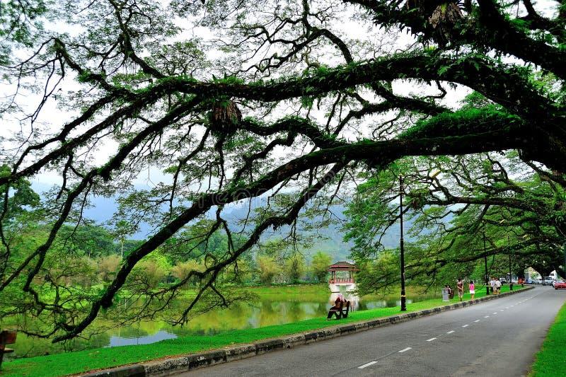 Сады озера Taiping стоковое фото