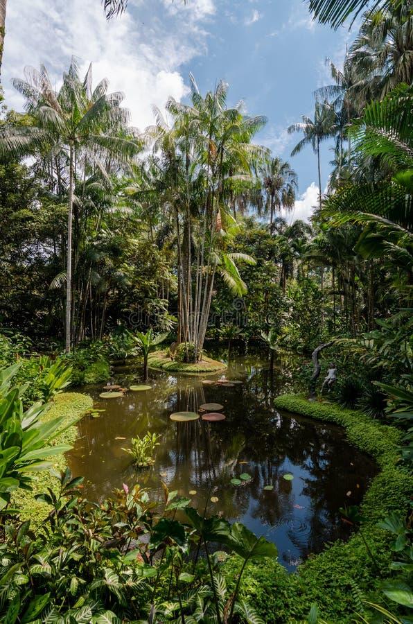 Сады Сингапура ботанические стоковые изображения rf