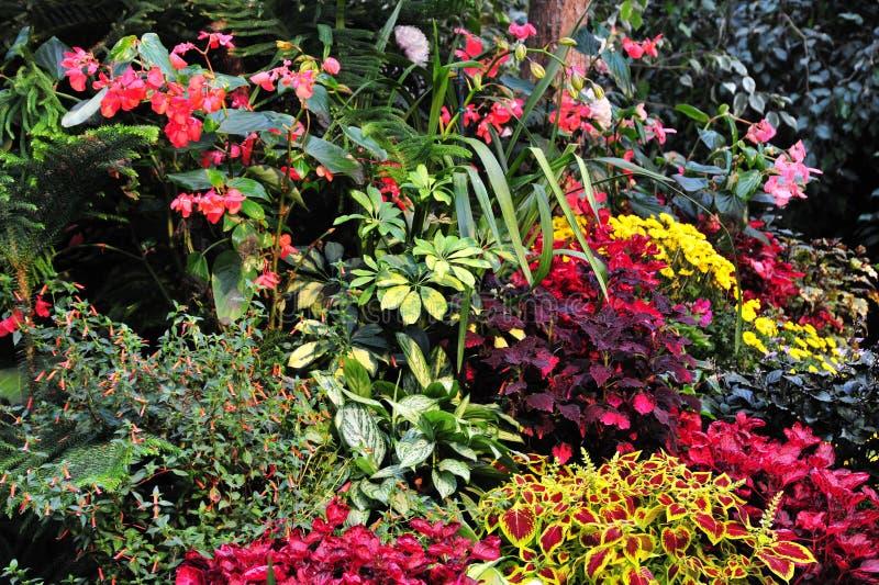 сады цветков стоковые изображения rf