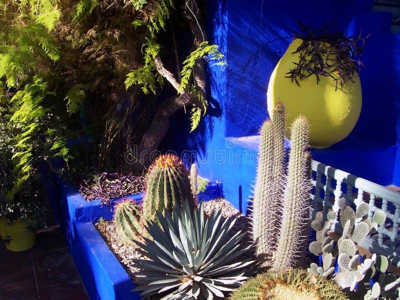 Сады Majorelle в Marrakesh стоковые фото