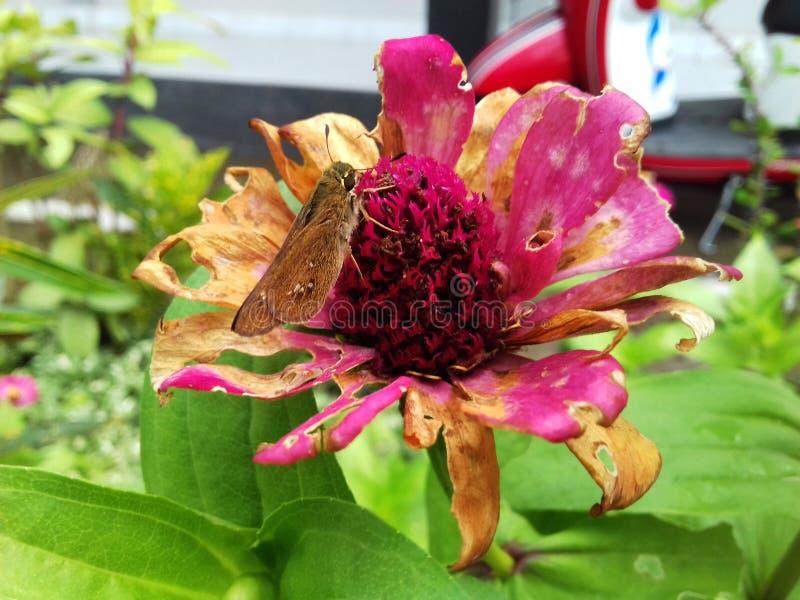 Садятся на насест бабочки стоковые фотографии rf
