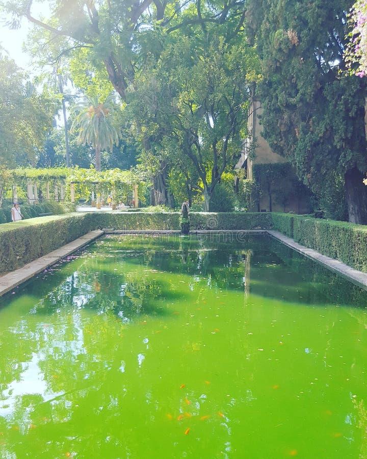 Сад Андалусия бассейна стоковые фотографии rf