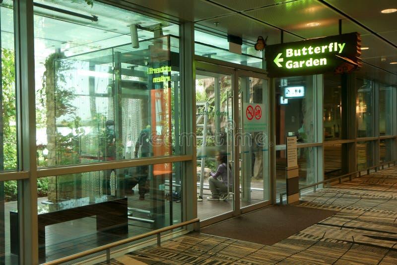 сад бабочки стоковая фотография rf