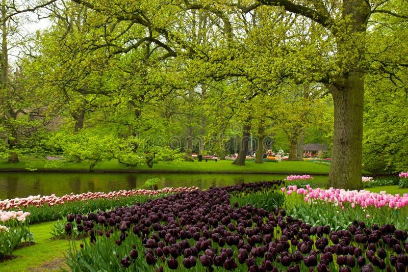 Сад весны в Keukenhof, Голландии стоковое изображение