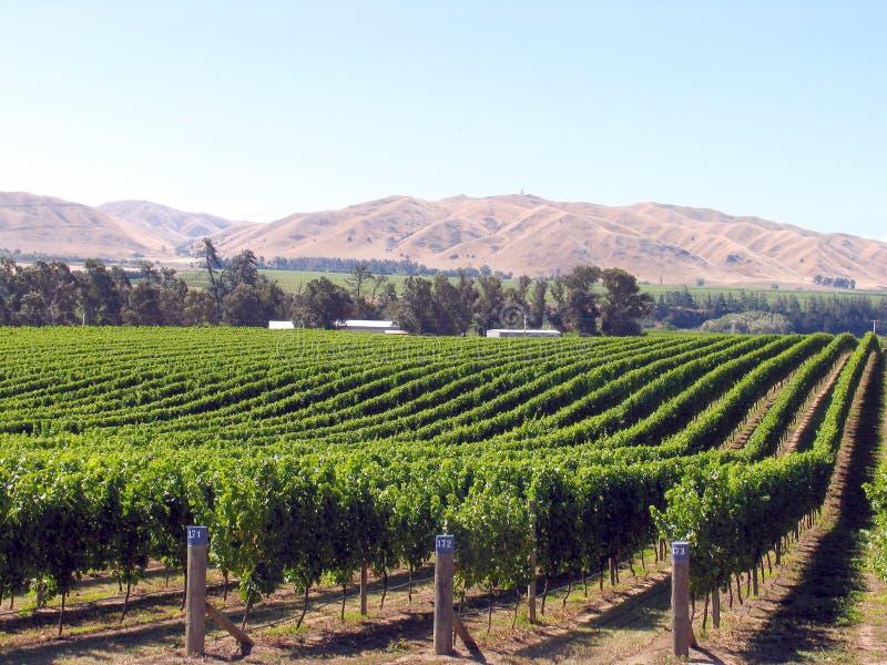 сад виноградины стоковые изображения