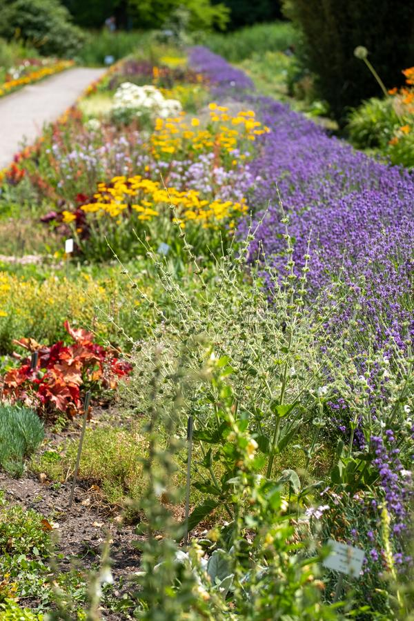 Сад вполне цветков на ботаническом саде университета Jagiellonian, Краков, Польши Сфотографированный летом стоковые изображения rf