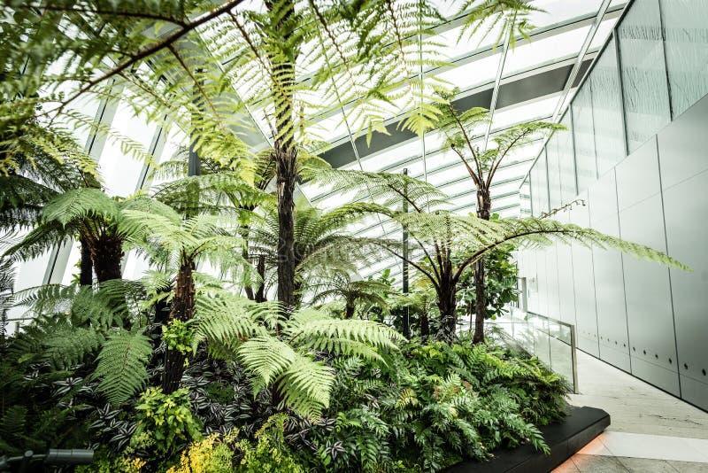 Сад в здании рации, Лондон неба стоковое изображение rf