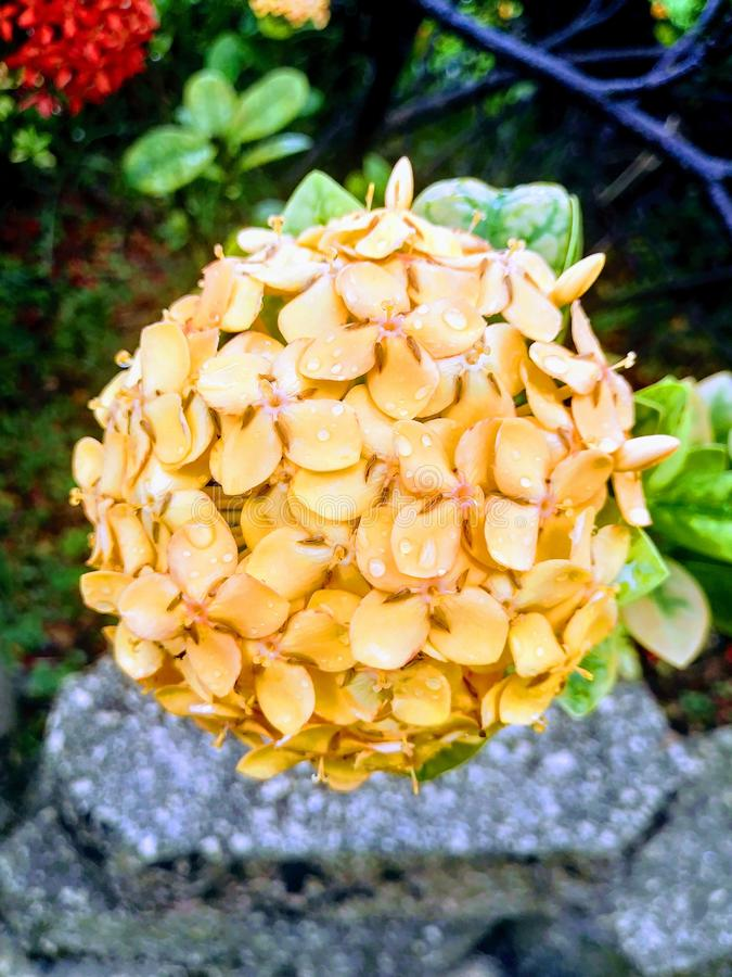 Сад в Майами, Флориде Соединенных Штатах стоковые изображения rf