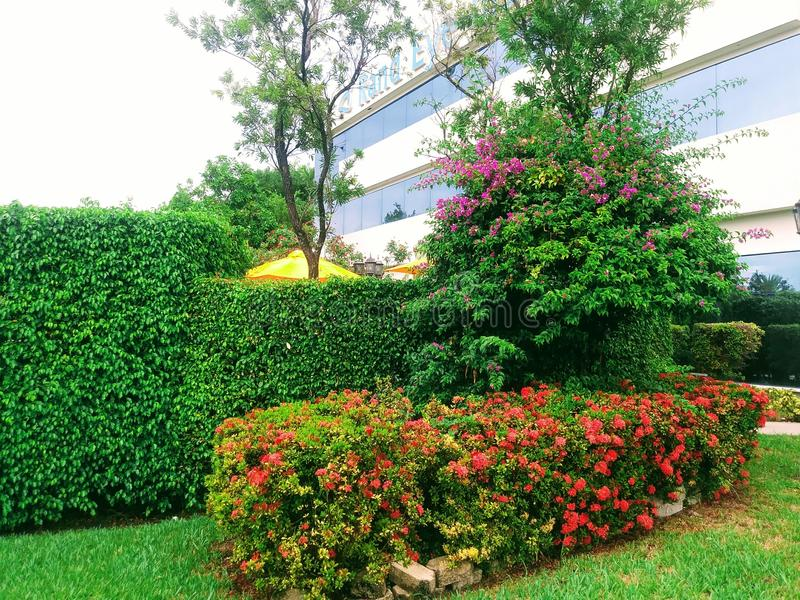 Сад в Майами, Флориде Соединенных Штатах стоковые фото