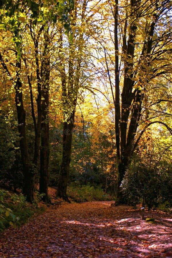 Сад в национальном парке Peneda Geres стоковое изображение