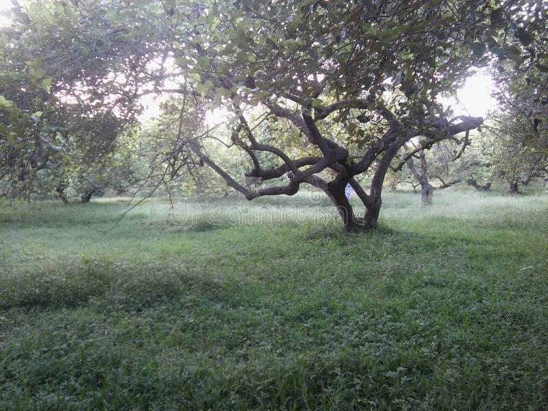 сад в deoband Индии стоковая фотография